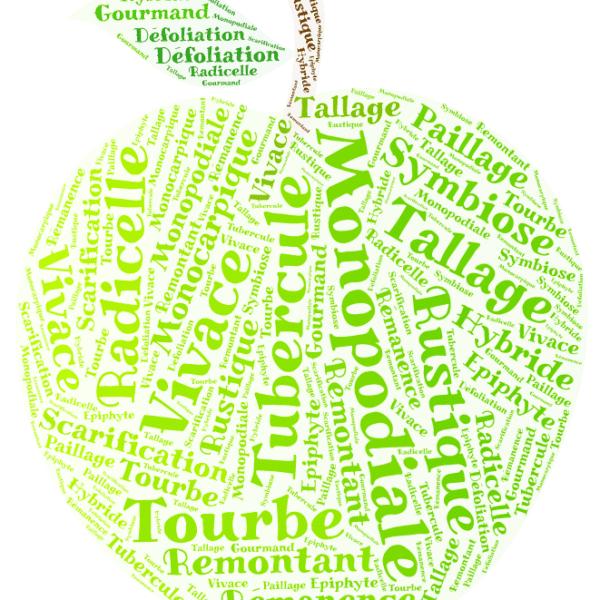 Pomme verte en nuage de mots