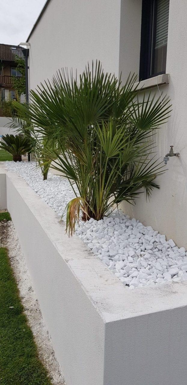 Palmiers plantés avec galets blanc