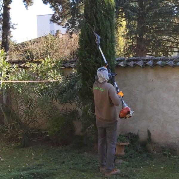 Taille d'un arbre par Thierry Gaulard